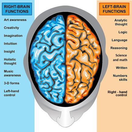 Hemispheres   Left & Right Hemispheres Roles, Facts ...