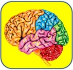 Human Brain For Kids | Facts, Information, Parts & More